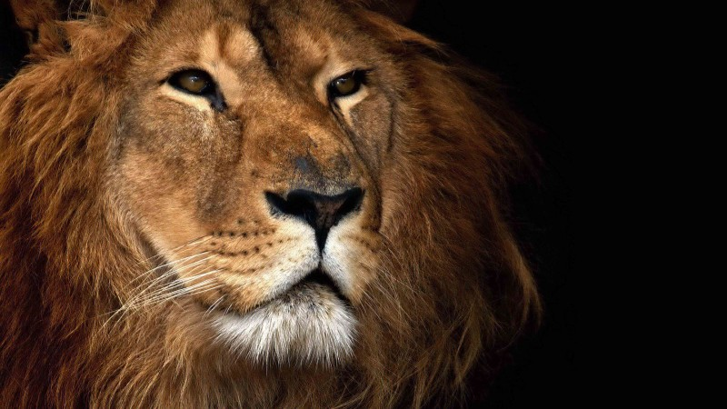 Health Wonk Review: In Like a Lion