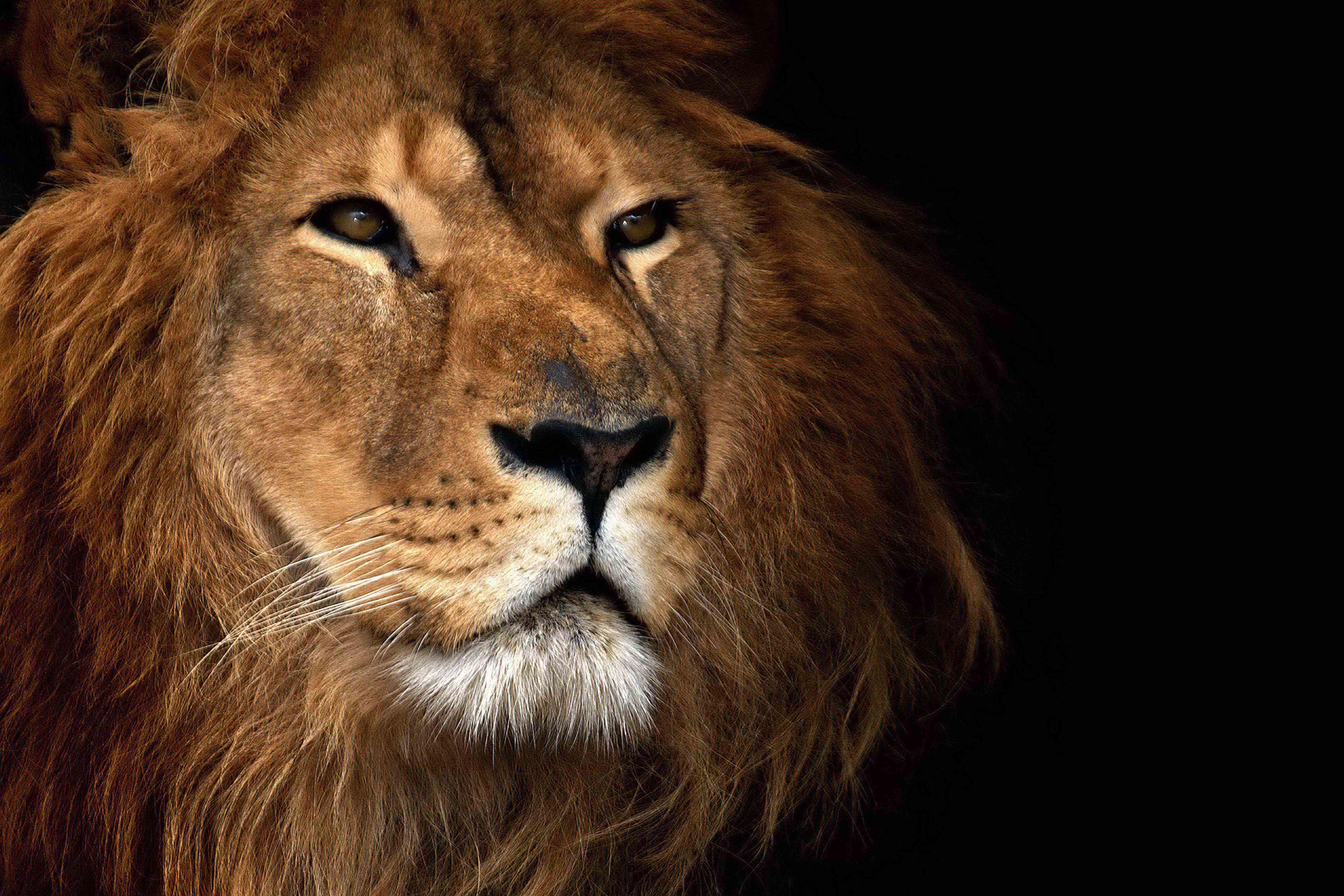 C Lion Review Health Wonk Rev...